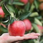 Der SEO Low Hanging Fruits Index - Seiten mit hohem SEO Potential identifizieren